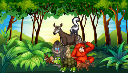 Various kind of wild animals living in the forest