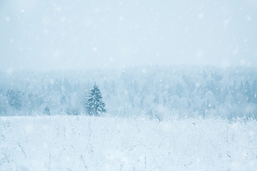 Lonely fir tree in a snowy field.