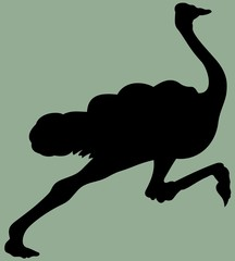 animal running ostrich silhouette vector