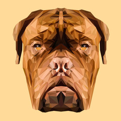 Dogue de Bordeaux French Mastiff dog animal low poly design. Triangle vector illustration