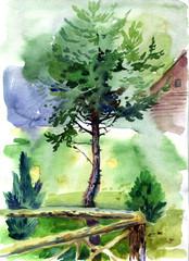pine watercolor