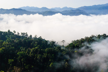 Morning mist at Khao Panoen Thung on Kaeng Krachan National Park