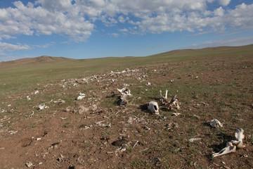 The bones of dead animals