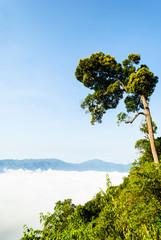 Morning mist at Khao Panoen Thung on Kaeng Krachan National Park