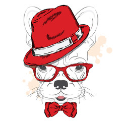 French Bulldog vector. Cartoon puppy. A dog in a hat and sunglasses. Cute puppy. Hipster. Boy. Pedigree dog.