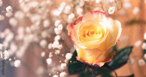 Einzelne Rose,romantisch, Panorama, Als Glückwunsch, Gratulation,  Hintergrund, Für Valentinstag