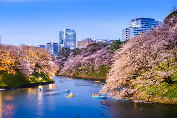 Tokyo Imperial Moat in Spring Wall mural