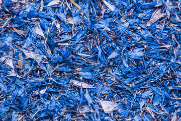 Blue knapweed flakes background.