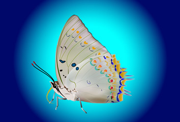 Beautiful Isolated Butterfly on blue background