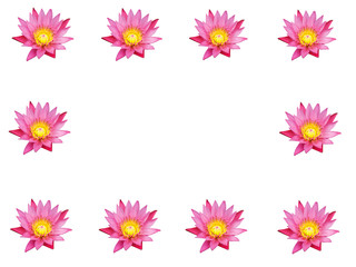 lotus flower isolated on white.