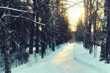 Alley trees walkway winter