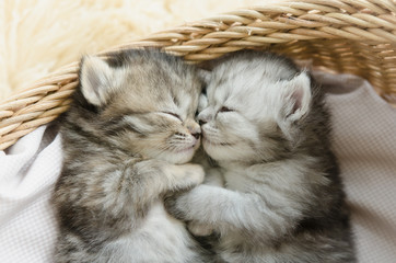 tabby kittens sleeping and hugging in a basket