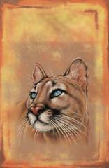 Puma, cougar cover art