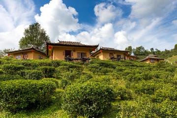 Tea Plantation With Chinese Style House