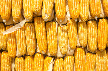 Yellow corn decorated for made yellow wall