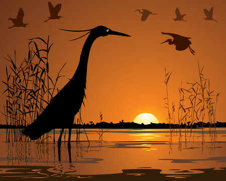 Birds in sunset swamp illustration