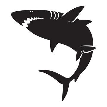 graphic shark, vector