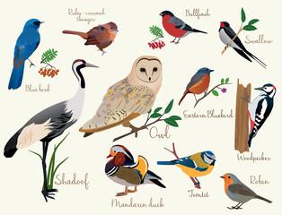 Estores personalizados com sua foto bird icons. Colorful realistic birds icons set isolared