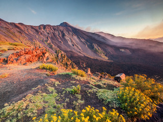 Etna Volcano in Sicily, Italy with colorful flowers on foreground Fototapete