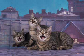 Kuril Bobtail kitten on the roof at night