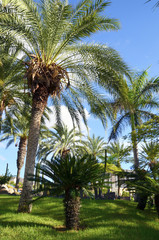 Palm trees in the park in Tenerife,Canary Islands.