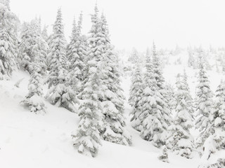 Snow Covered Winter Terrain Background