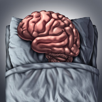 Brain Sleep