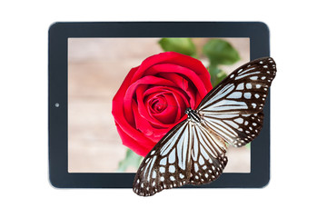 Butterfly on picture of red rose in tablet