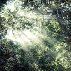 Summer forest jungle
