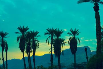 Green vintage sunset in desert. Palm trees against mountain