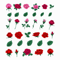 Set of Beautiful Roses. Flowers and Leaves
