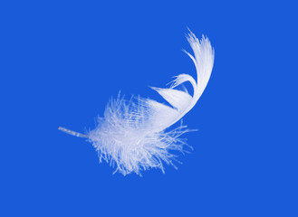 feather on blue sky background