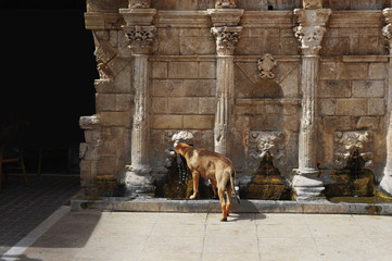 Dog drinking water from a fountain