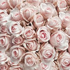 Pink vintage roses