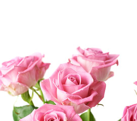 Bouquet of pink roses isolated