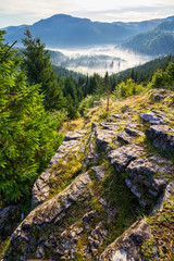 valley with conifer forest full of fog in mountain