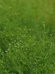 grüne zarte Pflanzen Textur