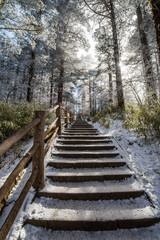 path in the Emei Mountain in winter -Leshan, Sichuan, China