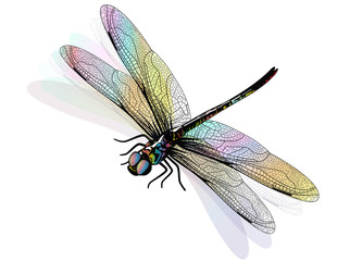 Vector dragonfly isolated and colorful. EPS 10