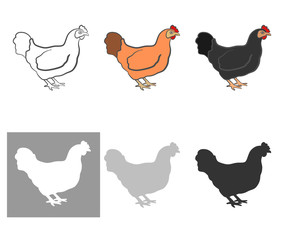 Poultry chicken, a set of six pieces. white, black, orange and silhouette. useful to store and farmer. Vector illustration