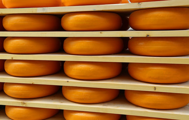 delicious Dutch cheese in cheese ripening in amsterdam