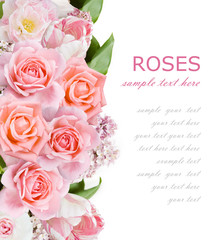 Lilac,roses and tulips beautiful flowers background isolated on white with sample text