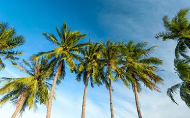 Row of tropical palm trees nature background