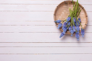 Blue muscaries flowers on white painted wooden planks.