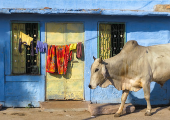 India Rajasthan Jodhpur. Blue city street life photography