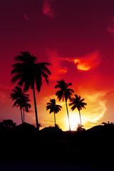 Palm tree sunset on tropical beach of Hawaii islands