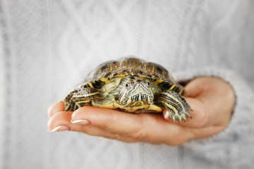 Turtle in woman hands, close up