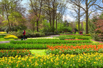 Fototapete - Cheerful Spring Flowers in Keukenhof Garden, Lisse, Netherlands