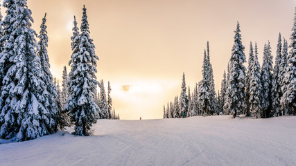 Wall Mural - Sun breaking through the clouds on a ski hill in central British Columbia. Snow covered trees surrounding the ski runs