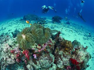 diver wtih reef caral Wall mural